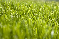 Free Close Up Shot Of Green Grass Field Royalty Free Stock Photo - 4761295