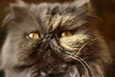 Free Cat Royalty Free Stock Photo - 4761965