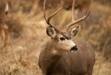 Free Wild Deer In The Wild Stock Photo - 4762090