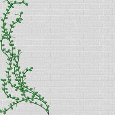 Vine Growing On Left Side Of Block Wall Stock Image