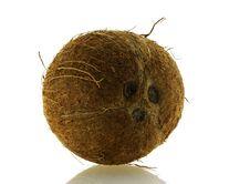 Free Close Up Shot Of Fresh Single Coconut Stock Photo - 4763210