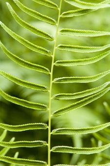 Fern Background Texture Royalty Free Stock Photography