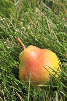 Free Fresh Pear Stock Photography - 4765552