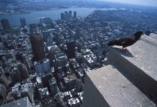 Pigeon / Dove / New York Royalty Free Stock Photos