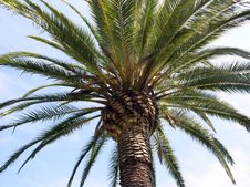 Free Palm Tree 01 Royalty Free Stock Images - 4767009