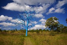 Free Blue Tree Royalty Free Stock Images - 4767519