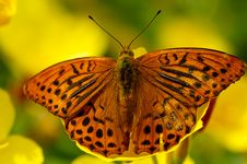 Free Wings Of Butterfly Stock Image - 4767871