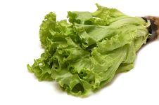Free Fresh Lettuce Royalty Free Stock Photos - 4767888