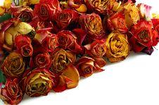 Free Roses Background Stock Photo - 4767960