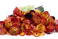 Free Roses Background Stock Photo - 4767980