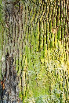 Free Bark. Stock Photography - 4768072