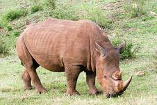 Free Rhino Portrait Stock Images - 4769364
