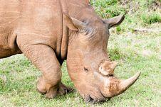Free Rhino Portrait Stock Photo - 4769400