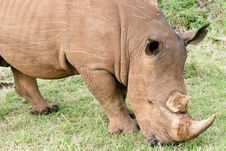 Free Rhino Portrait Stock Photo - 4769410