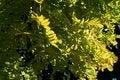 Free Golden Tree Stock Photos - 4770383