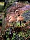 Free Fungi On Log Stock Photo - 4771910