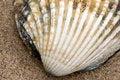 Free Seashell On A Beach Stock Photos - 4773163