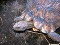 Free Tortoise Royalty Free Stock Photos - 4773848