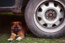 Free Puppy Royalty Free Stock Photo - 4770175
