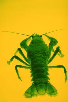 Free Crayfish Stock Images - 4770214