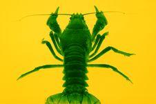 Free Crayfish Stock Photo - 4770250