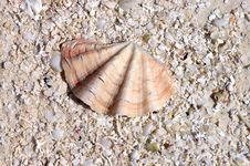 Free Seashell On The Beach Royalty Free Stock Images - 4770629
