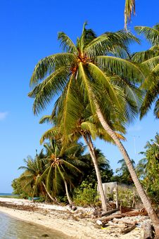 Free Tropical Beach Royalty Free Stock Photography - 4770957