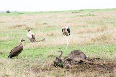 Free Birds In The Bush Royalty Free Stock Photo - 4772065