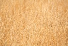Free Dry Grass Background Stock Images - 4772314
