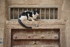 Free Cat On The Ornamented Door Royalty Free Stock Photos - 4772748