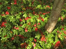 Pile Of Red And Green Leaves Stock Photo