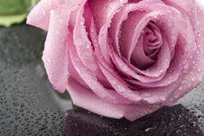 Free Rose On Black Glass Stock Photo - 4773440