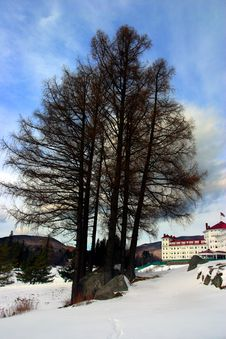 Free Bretton Woods, New Hampshire Royalty Free Stock Photo - 4773955