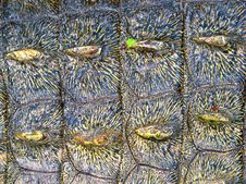 Free Crocodile Skin Stock Images - 4773974