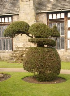 Free Topiary Squirrel Royalty Free Stock Image - 4776646