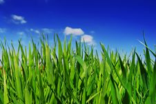 Free Fresh Grass Royalty Free Stock Photography - 4777607