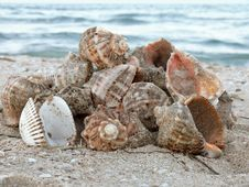 Free Gifts Of The Sea Stock Images - 4778254