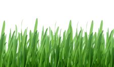 Free Green Grass Isolated Royalty Free Stock Photography - 4778257