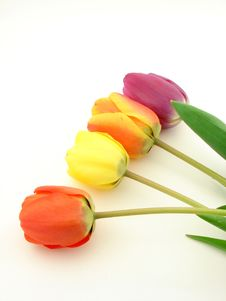 Free Tulips Isolated Stock Images - 4779254