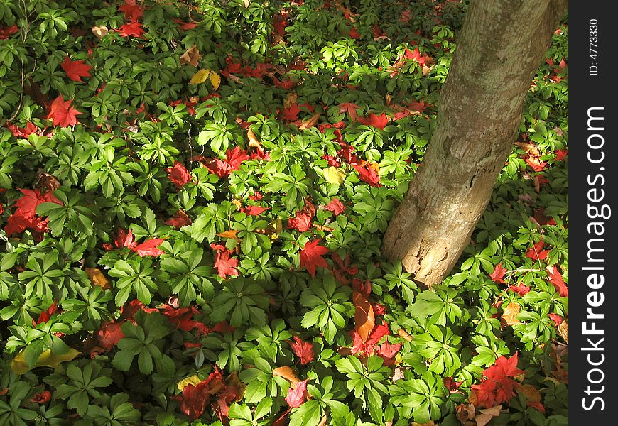 Pile of Red and Green Leaves