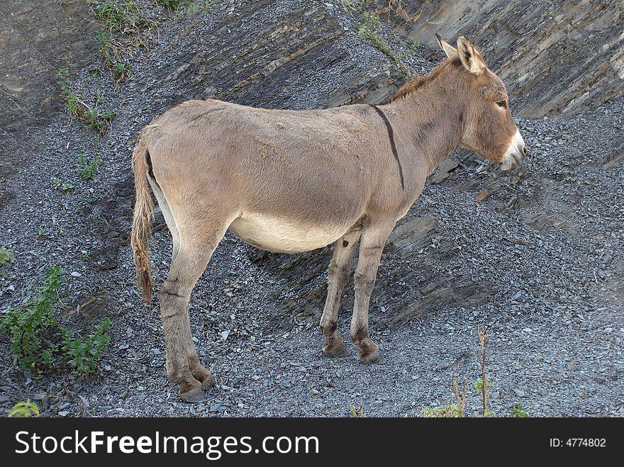 One standing burro
