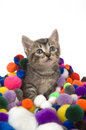 Free Kitten And Colorful Puff Balls Stock Images - 4781114
