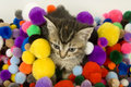 Free Kitten And Colorful Puff Balls Stock Image - 4781151