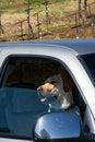 Free Dog Days Stock Photo - 4783250