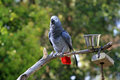 Free Bird On A Branch Stock Image - 4789951