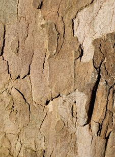 Free Tree Bark Royalty Free Stock Photo - 4780535