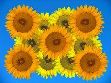 Free Sunflowers Royalty Free Stock Photos - 4780608