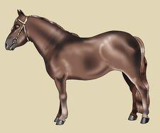 Free Brown Pony - Pottok Breed Stock Photos - 4780943