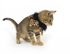 Free Kitten With Bells On Royalty Free Stock Photos - 4781098