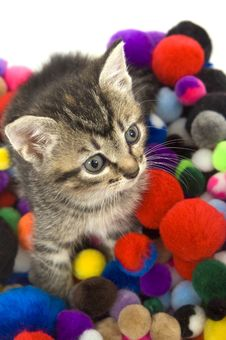 Free Kitten And Colorful Puff Balls Royalty Free Stock Images - 4781109